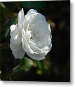 Sunshine White Rose Metal Print