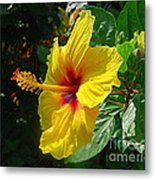 Sunshine Yellow Hibiscus With Red Throat Metal Print