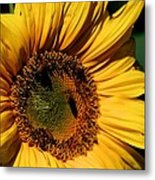 Sunshine's Blessing Metal Print