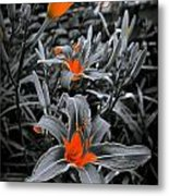 Suntouched Hearts Metal Print