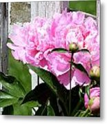 Supporting Peony Metal Print