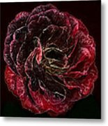Supreme Rose Metal Print