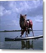 Surfer Dog Metal Print by Susan Sidorski
