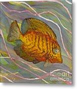 Surgeonfish Metal Print