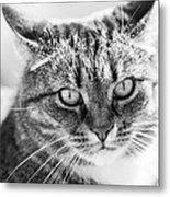 Surprised Cat Metal Print