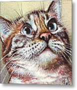 Surprised Kitty Metal Print by Olga Shvartsur