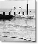 Surprised Seagulls Metal Print