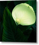 Surreal Peace Lily Metal Print