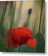 Surrealistic Red Metal Print