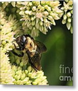 Surrounded By Petals Metal Print