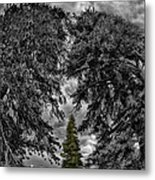 Surrounded Green Tree Metal Print