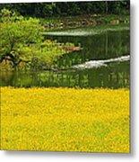 Susans Gold Pond Metal Print