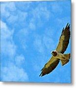 Swainson's Hawk Snake River Birds Of Prey Natural Conservation Area Metal Print