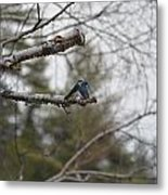 Swallow Discussion Metal Print