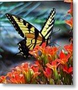 Swallow Tail Butterfly Posing Metal Print
