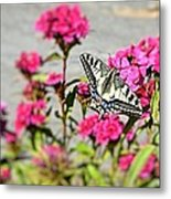 Swallow Tail Metal Print by Dave Woodbridge