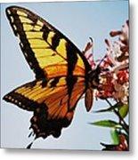 Swallowback Butterfly # 2 Metal Print