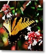 Swallowback Butterfly # 1 Metal Print