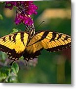 Swallowtail 1 Metal Print