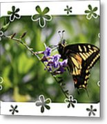 Swallowtail 4 With Flower Framing Metal Print