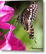 Swallowtail And Azalea - Love Metal Print