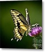 Swallowtail And Friends Metal Print