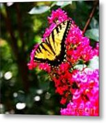 Swallowtail Beauty  Metal Print