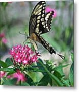 Swallowtail Butterfly 01 Metal Print