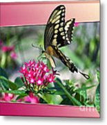 Swallowtail Butterfly 02 Metal Print