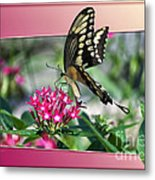 Swallowtail Butterfly 03 Metal Print