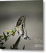 Swallowtail Butterfly 2014 Metal Print
