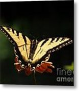 Swallowtail Butterfly Metal Print