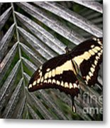 Swallowtail Butterfly Metal Print by Olivier Le Queinec