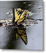 Swallowtail - Butterfly - Reflections Metal Print