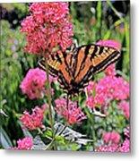 Swallowtail Butterfly Metal Print