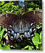 Swallowtail Butterfly Metal Print by Susan Leggett