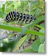 Swallowtail Caterpillar Metal Print