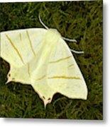 Swallowtail Moth Metal Print