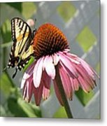 Looking Up At Swallowtail On Coneflower Metal Print