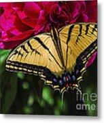 Swallowtail On Peony Metal Print