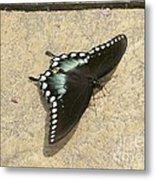 Swallowtail On The Rocks Metal Print