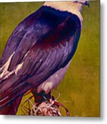 Swallowtail Pose Metal Print