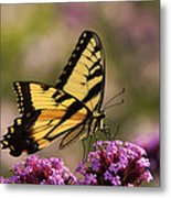Swallowtail Sweetness Metal Print