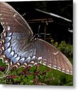Swallowtail With A Lil Vintage  Metal Print