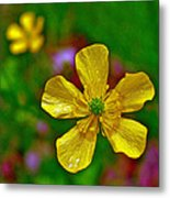Swamp Buttercup Near Loon Lake In Sleeping Bear Dunes National Lakeshore-michigan  Metal Print