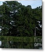 Swamp Cypress Trees Digital Oil Painting Metal Print