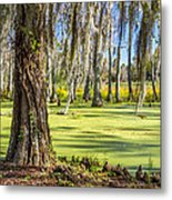 Swamp In Magnolia Plantation And Gardens Charleston Sc Metal Print