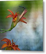 The Wood Lily And Dragon Fly Metal Print