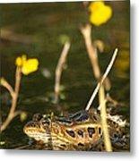 Swamp Muscian Metal Print