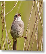 Swamp Sparrow Split Decision Metal Print